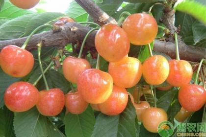 种植课堂:果树修剪的七大常见误区