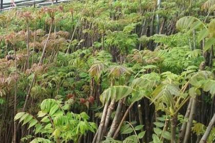 春节后种植这三种农作物,年收入好过打两年工