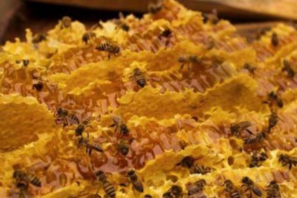 中蜂养殖遇上了精准扶贫,养蜂人提四点建议