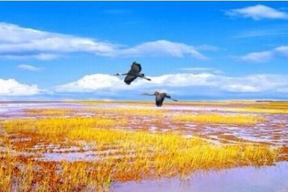 确保湿地不蚀退 院士专家把脉黄河口生态保护