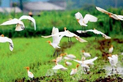 坚持和完善生态文明制度体系 建设美丽中国