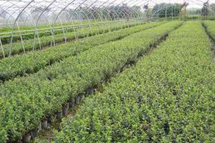 太原绿化苗供应价格