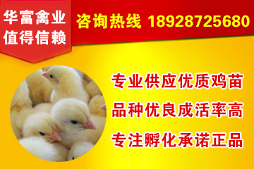 宜昌野鸡养殖