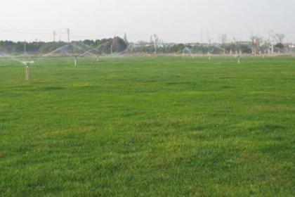 铁岭哪有优质低价草坪