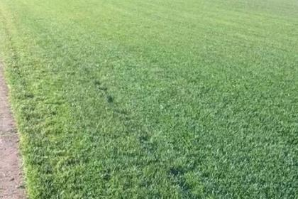 太原草坪种植