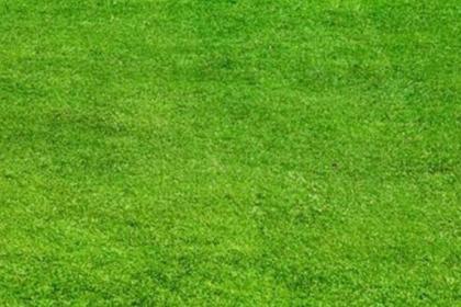 辽阳草坪基地