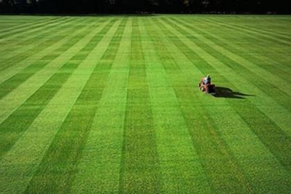 铁岭足球场草坪