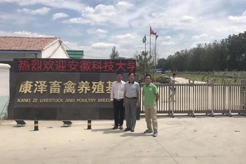 安徽湖羊大型养殖场