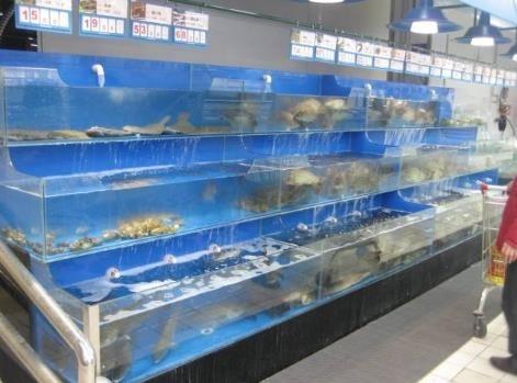 深圳建海鲜池